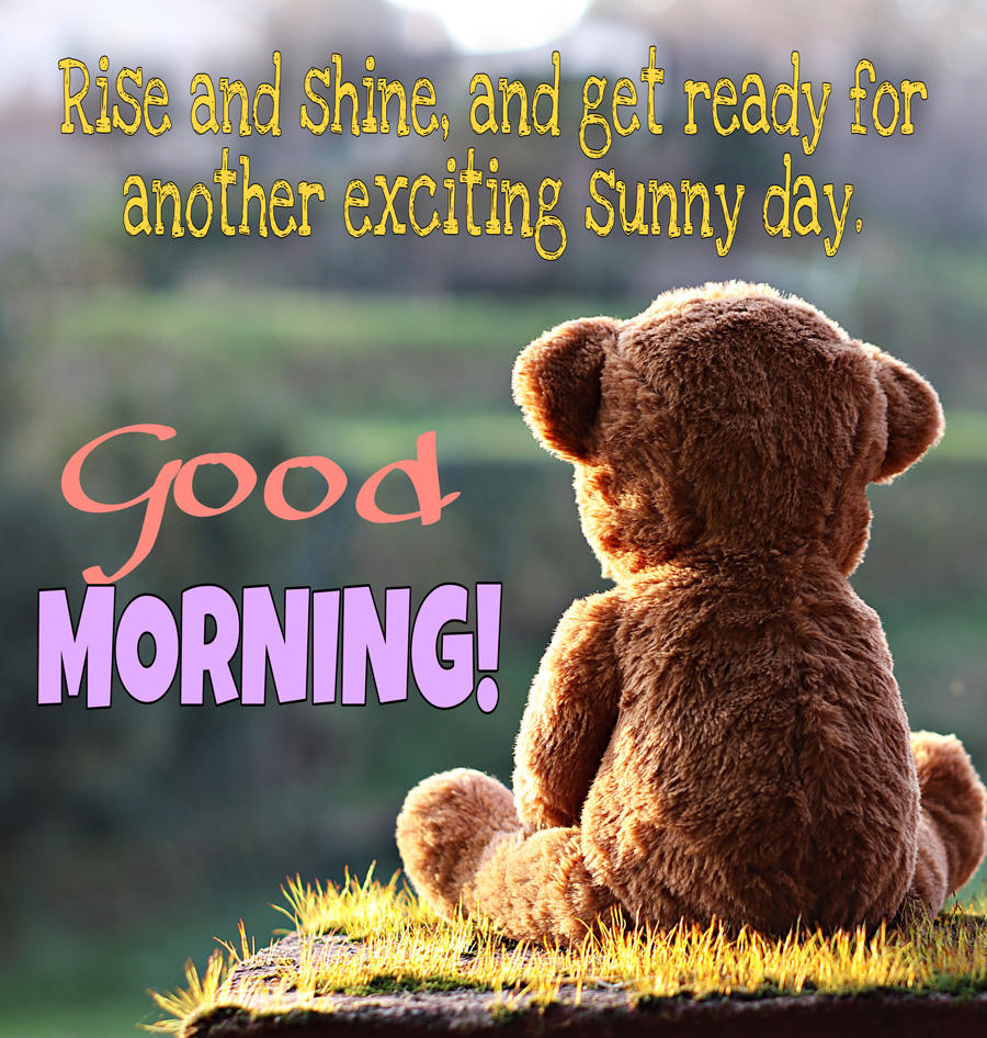Good morning image with teddy bear is looking towards the sun