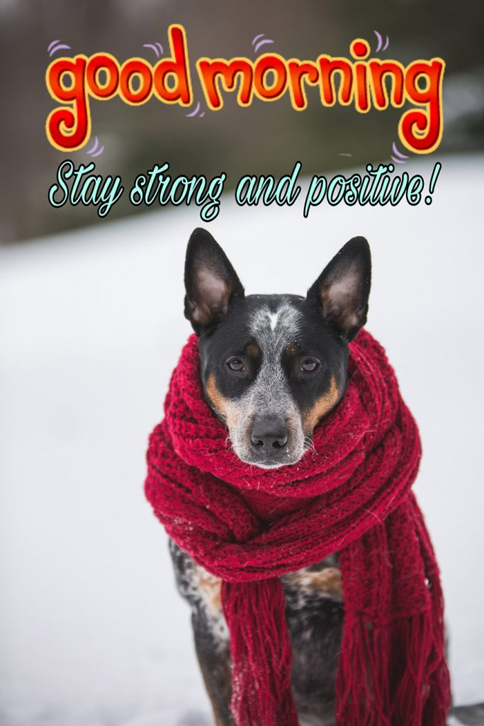Good morning image with the dog is wearing a scarf