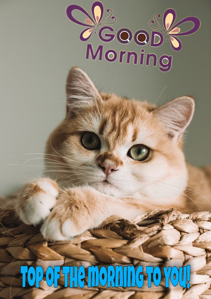 Good morning cat image to you