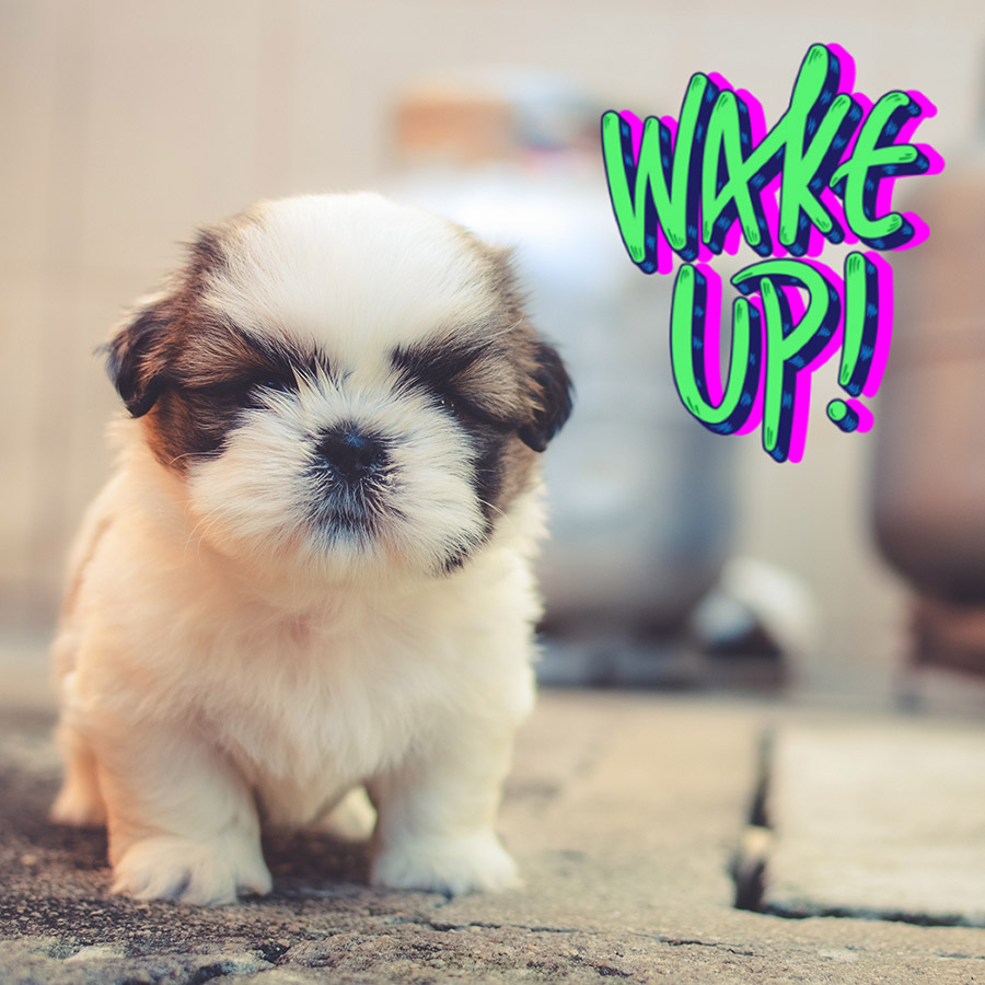 Good morning image with baby puppy