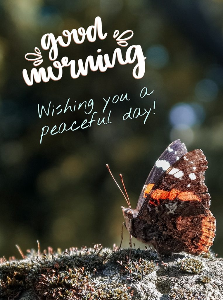 Good morning photo with the butterfly is sitting on the moss