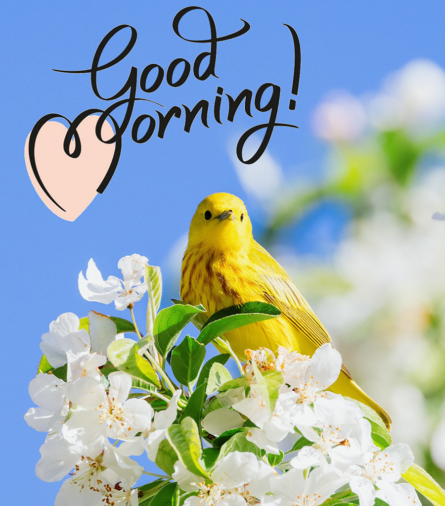 Good morning image with bird and flowers