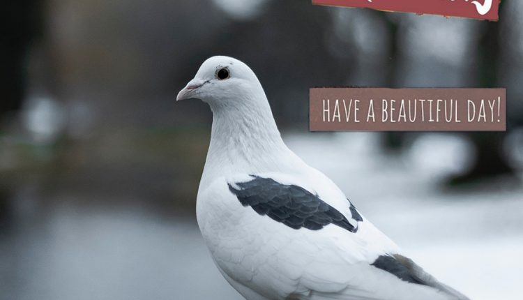 good-morning-bird-have-a-beautiful-day