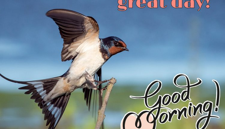 good-morning-bird-have-a-great-day