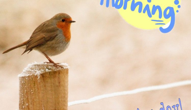 good-morning-bird-have-a-nice-day
