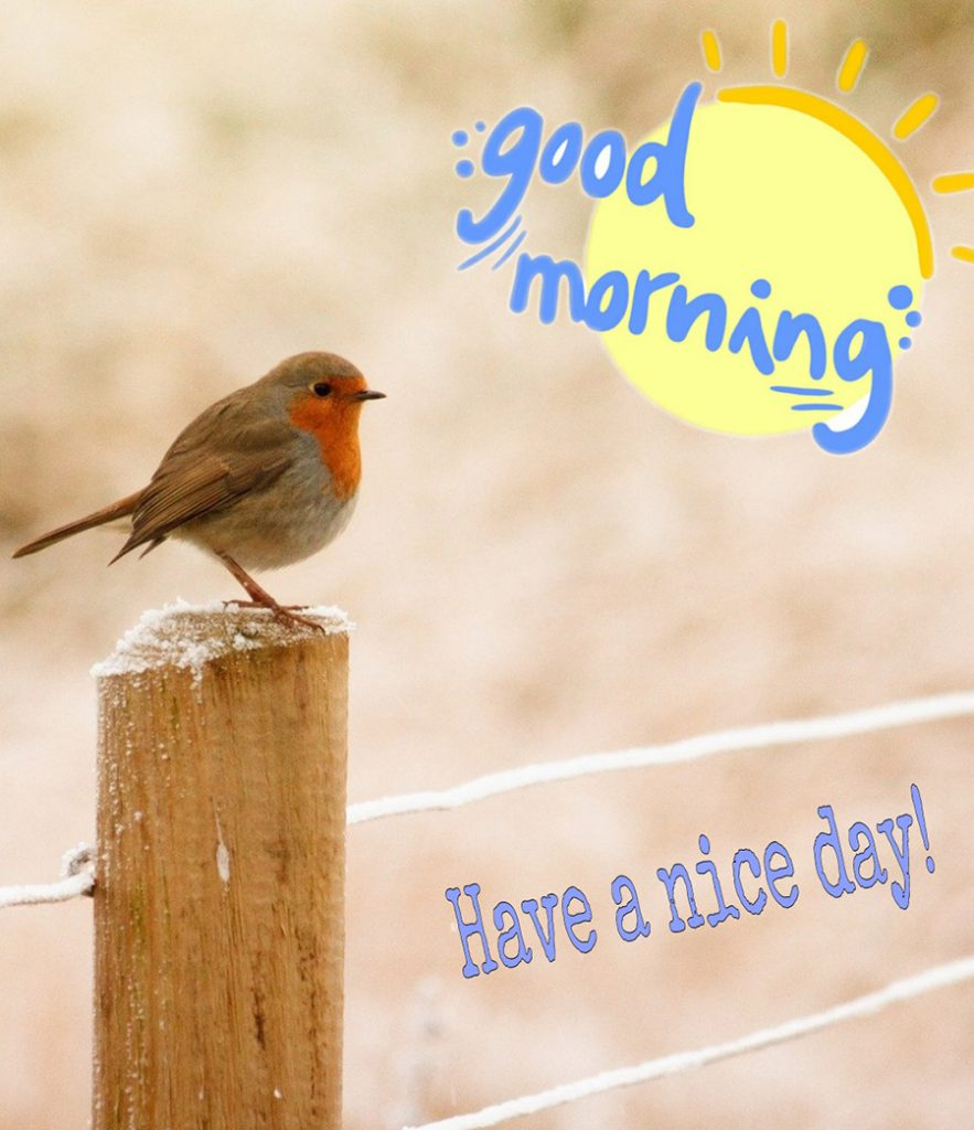 Good morning image with little bird perched on a wooden pole
