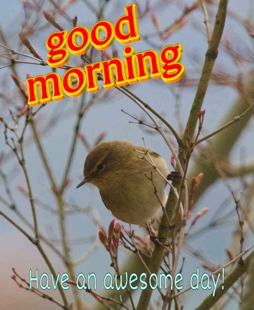 Good morning image with the little bird