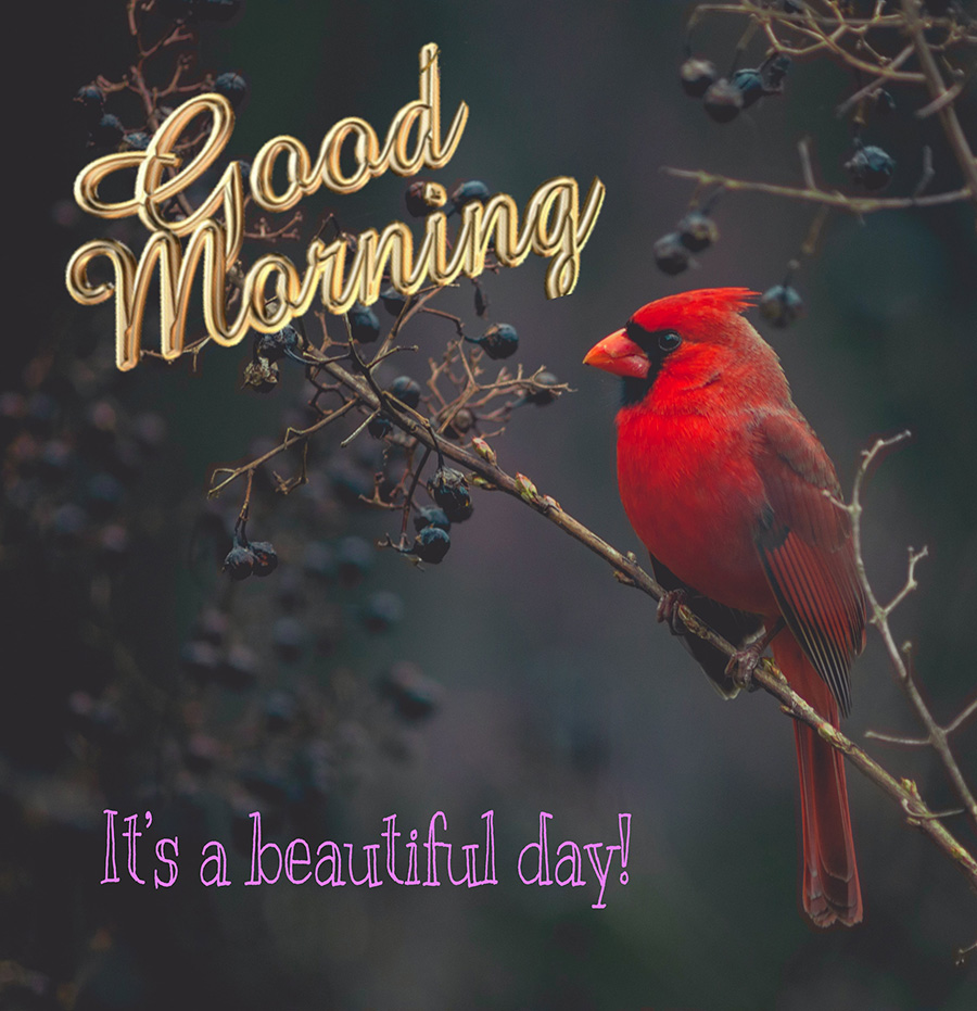 Good morning images with red bird