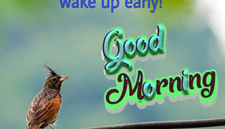 good-morning-bird-picture