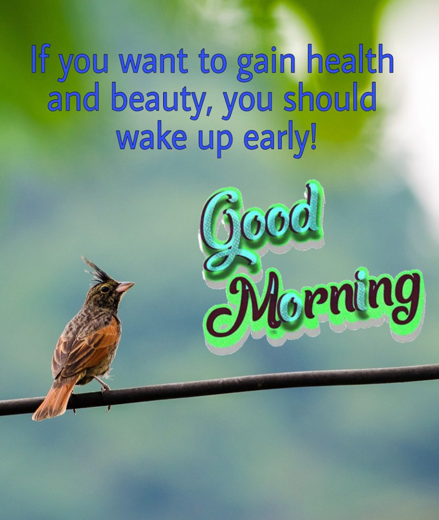 Good morning bird picture