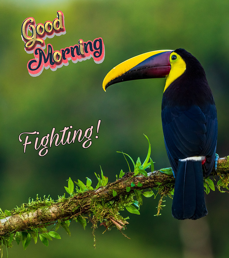 Good morning image with the keel-billed toucan