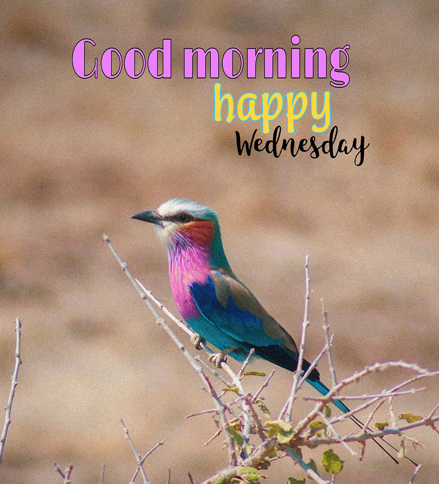 Good morning image with colorful bird