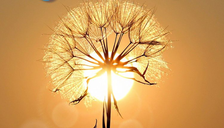 good-morning-image-with-sun-and-dandelion