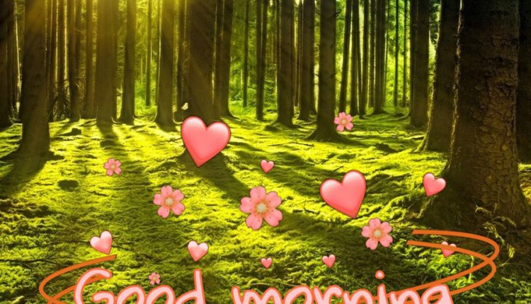 good-morning-image-with-sun-and-forest