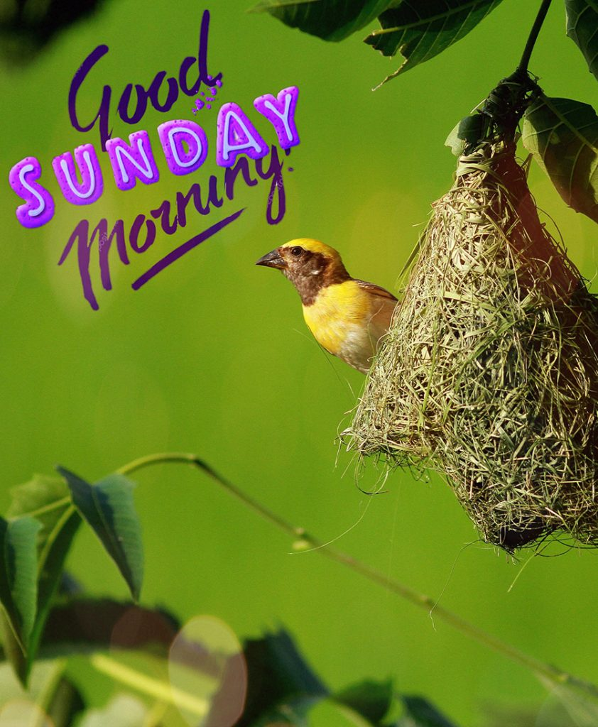 Good morning image with the bird is nesting