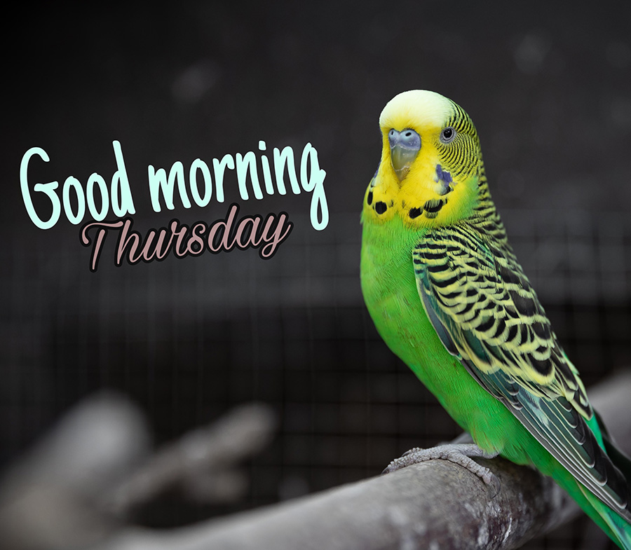 Good morning thursday image with green parrot