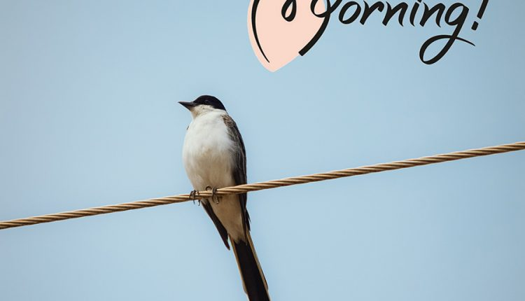 good-morning-with-long-tailed-bird