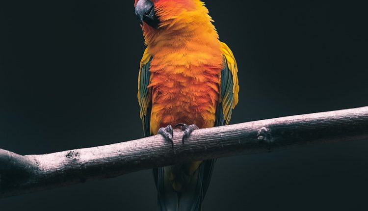 good-morning-with-parrot