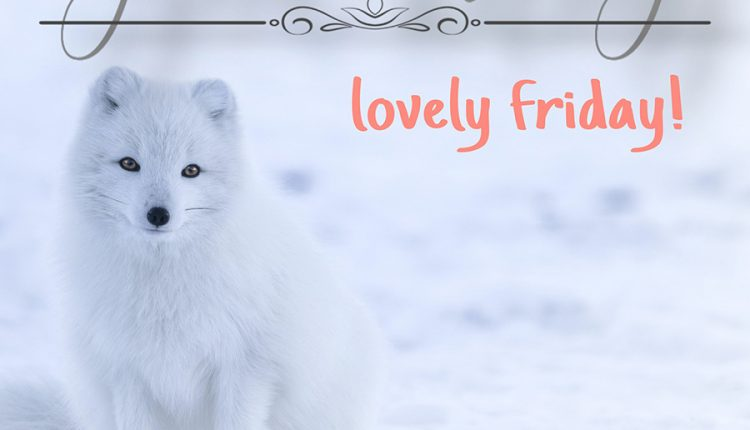 good-morning-image-with-snow-fox