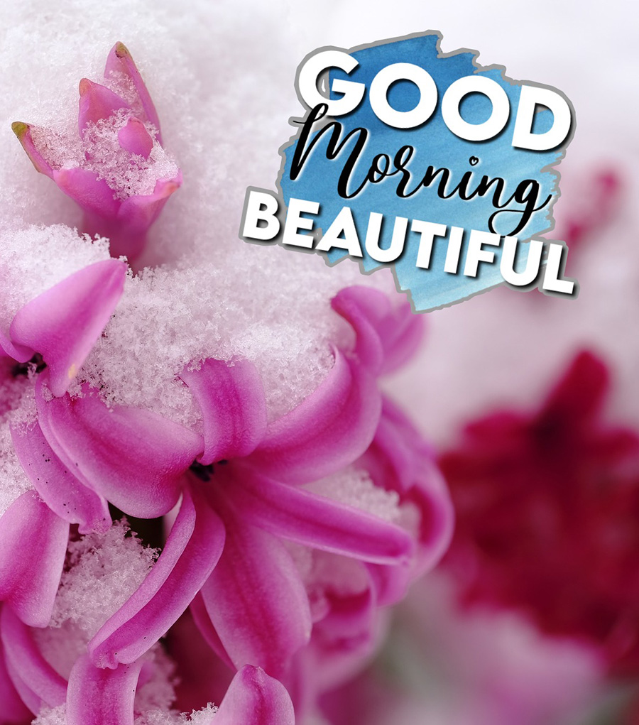 Good morning snow covered flowers